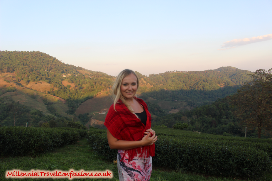 Doi Mae Salong Village - Oolong tea plantaion Thailand