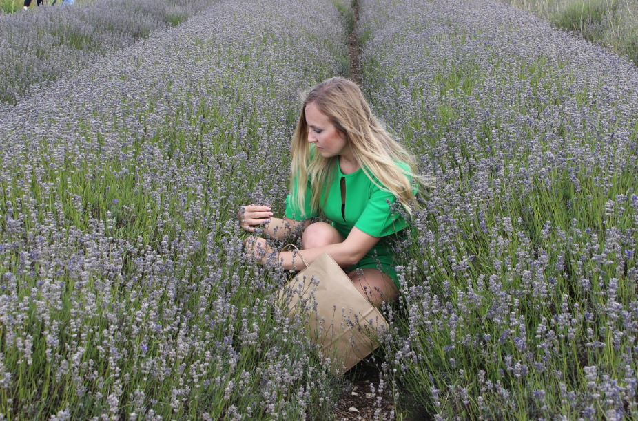 The Sea of Dazzling Lavender Fields in the UK Countryside